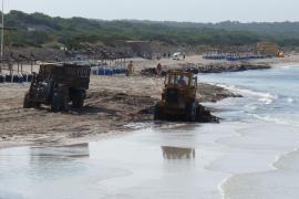 Beseitigung der Seegras-Reste am Es-Trenc-Strand mit schwerem Gerät.