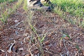 Bauern verzweifeln an schlechter Ernte