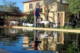 """Viel Platz und keine Zwinger: In Henk Rijkers """"Hundebetreuung Mallorca"""" leben die Tiere mit dem Niederländer zusammen. Poolnutzu"""