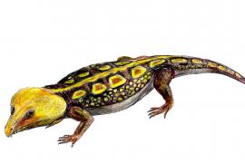 Auf Mallorca gefundenes Fossil 260 Millionen Jahre alt