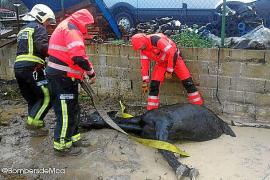 Feuerwehr rettet Hund und Pferd – Ziege tot