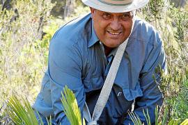 Guillem Cassellas bei der Ernte der Palmwedel in den Bergen von Artà.