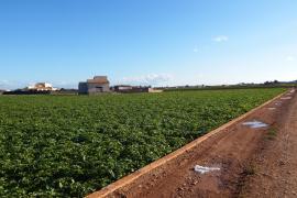 Landwirt kommt bei Feldarbeit ums Leben
