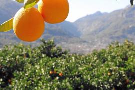 Renaissance im goldenen Tal auf Mallorca