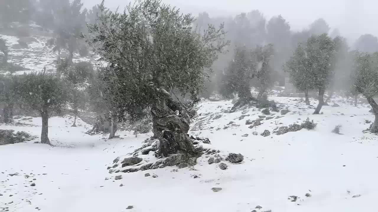 Schneeflocken in Palma: Straßensperren,Wetterwarnung