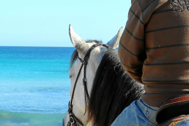 Da steht ein Pferd am Strand! Fast überall auf Mallorca ist das in den Wintermonaten erlaubt