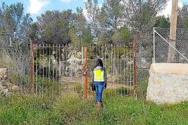 Pferde auf Mallorca lebendig begraben