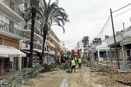 Polemik um die Palmen von Can Picafort