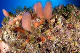 Oceana fordert größeres Meeresschutzgebiet