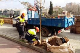 Palma pflanzt 1000 neue Bäume
