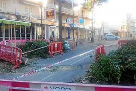Gummibäume in Cala Bona sind jetzt gefällt