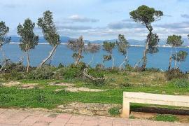 Illegales Bäumefällen für den Blick aufs Meer
