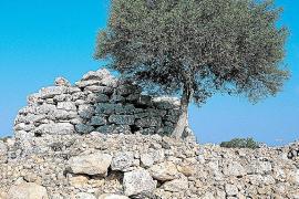 Die prähistorische Siedlung Capocorb ist eine der größten auf Mallorca.