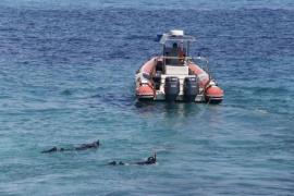 Zwei Wasserleichen vor Mallorca entdeckt