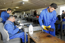 Großes Projekt zur Weinreben-Veredelung in Biniagual