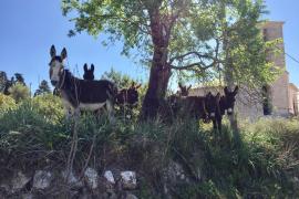 Wo der Esel zum Forstpfleger wird