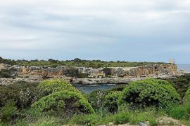 Grünzone statt Beton an Küste von Cala Figuera