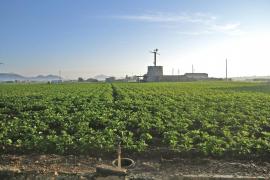 Bau-Boom in Mallorcas Kartoffeldorf