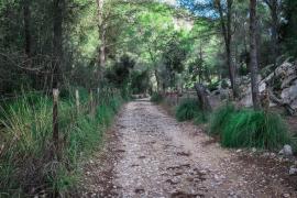 Polizei identifiziert bei Alaró gefundene Leiche