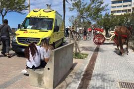 Kutscher und Pferd bei Verkehrsunfall verletzt