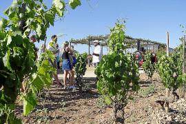 Weinausflug auf Mallorca.