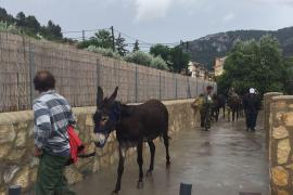 Rekordregen: Sechs Esel aus den Fluten gerettet