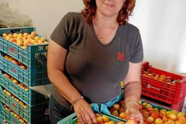 Aprikosenfest steigt trotz kleinerer Aprikosenernte