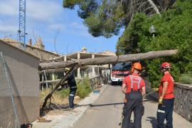 Bienennest macht Feuerwehr in Andratx zu schaffen