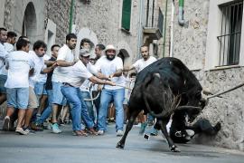 """Correbou"" auf Mallorca: Zahmer Ochse statt Stier"