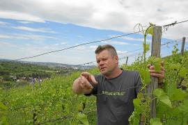 Weinbau-Achse von Schwaben nach Mallorca