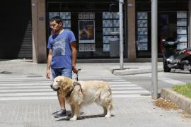 Blindenhund auf Mallorca rettet Herrchen das Leben