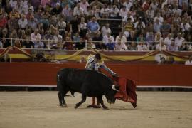 Stierkampf in Zukunft nur noch ohne Blut