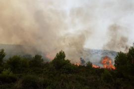 Brände vernichteten fast vier Hektar Wald
