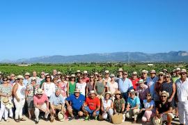 Die Weinlese auf Mallorca hat begonnen