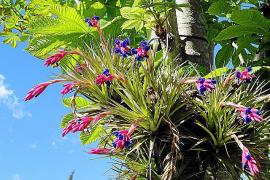 Zwei Exoten im Mallorca-Garten