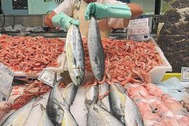 Mallorcas Fischer fangen wieder Goldmakrelen