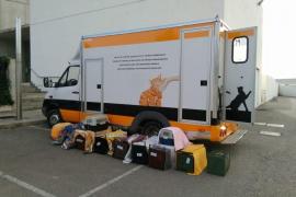 Calvià gibt 26.000 Euro für Tierschutz aus