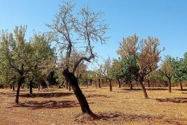 EU-Kommission verhindert Kahlschlag auf Mallorca