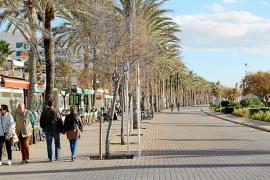 Mallorca verzeichnet ein kräftiges Winterwachstum