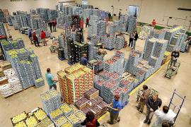 Lebensmittelgroßmarkt Mercapalma vor Rekord