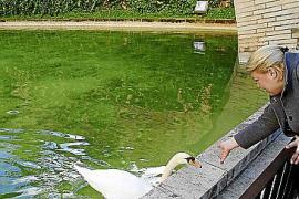 Brunnen des Königsgartens werden gereinigt