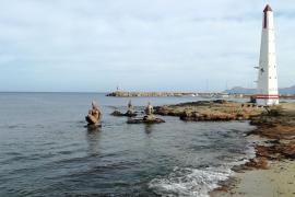 Kalter, stürmischer Nordwind bringt Mallorca Nachtfrost