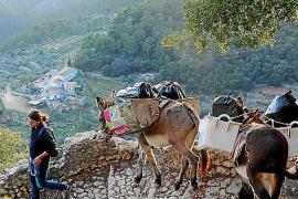 Esel auf Mallorca: Arbeitstier, Kumpan, Kulturgut