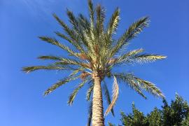 Wetterchen: 22,4 Grad in Palma gemessen