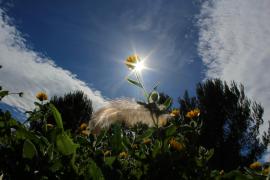 Sonnenenergie auf Mallorca auf dem Vormarsch