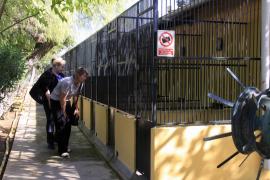 Weniger Hunde im Tierheim Son Reus eingeschläfert