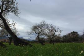 Regen bringt den Winter nach Mallorca zurück