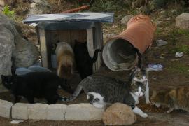 Neue Subventionen für Katzenkastrationen