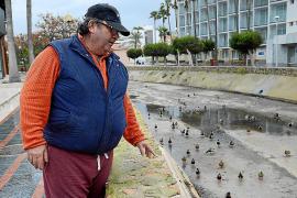 Anwohner von Santa Ponça wollen wieder Enten füttern