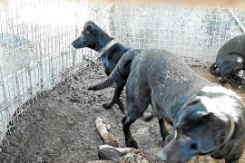 Hunde auf Mallorca mit Schafskadaver eingesperrt